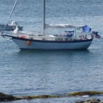 Seabird on a mooring